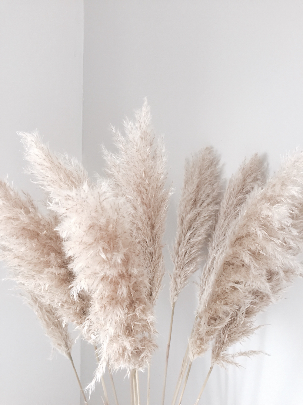 Weddings With Pampas Grass