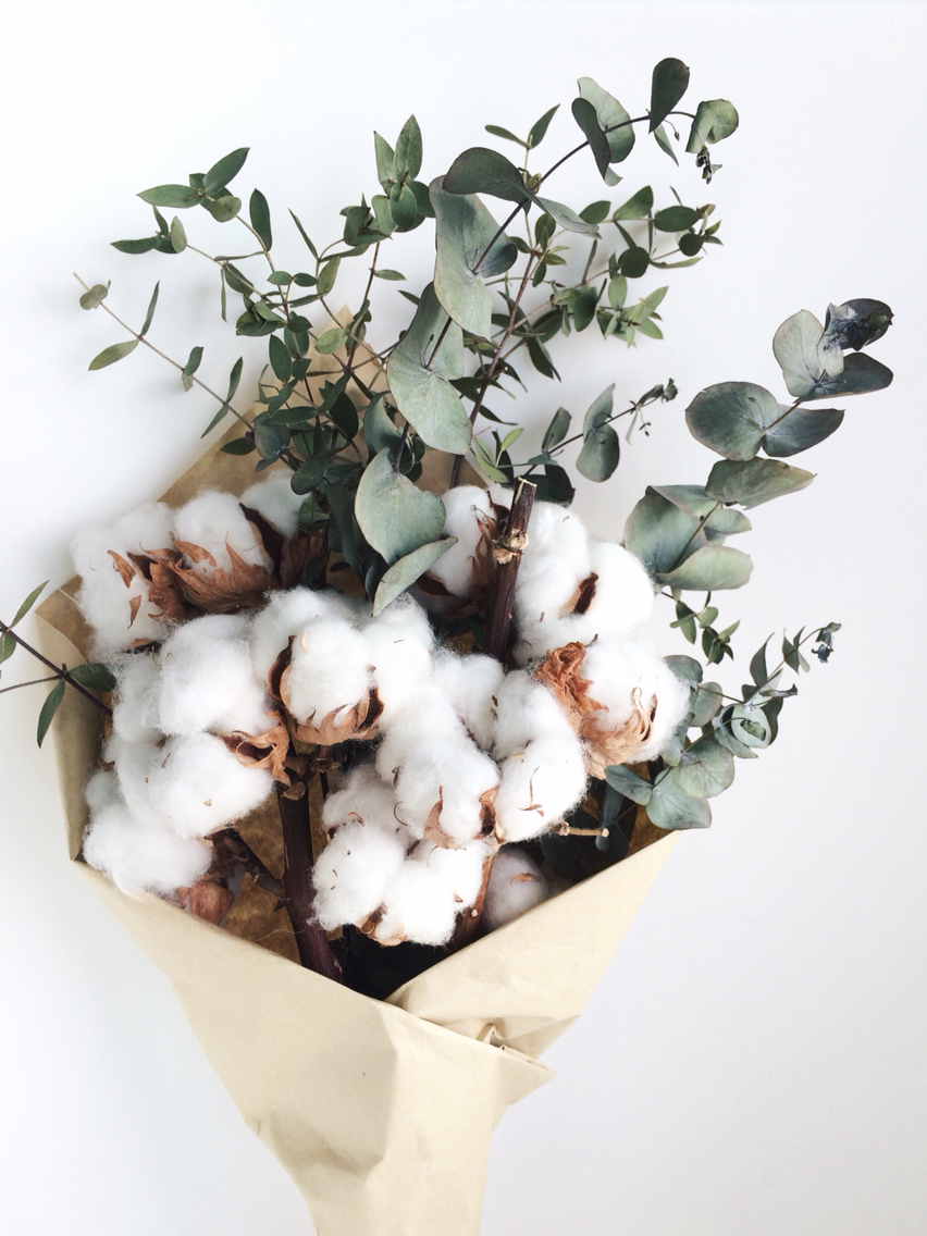 Dried Cotton & Preserved Eucalyptus | Curious Country Creations ...