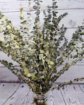 Dried Eucalyptus Basil Color