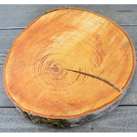 Red Alder Wood Slices (Birch Slices) - Medium