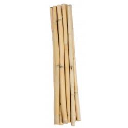 Short Dried Bamboo Sticks - Shoots