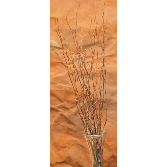 Dried Birch Branch Tips