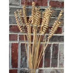 Dried Cane Springs