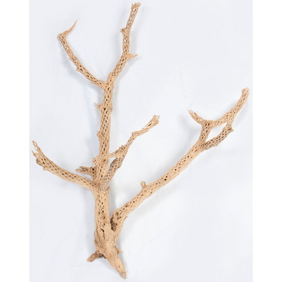 Cholla Cactus Tree Finger - Sandblasted Branches