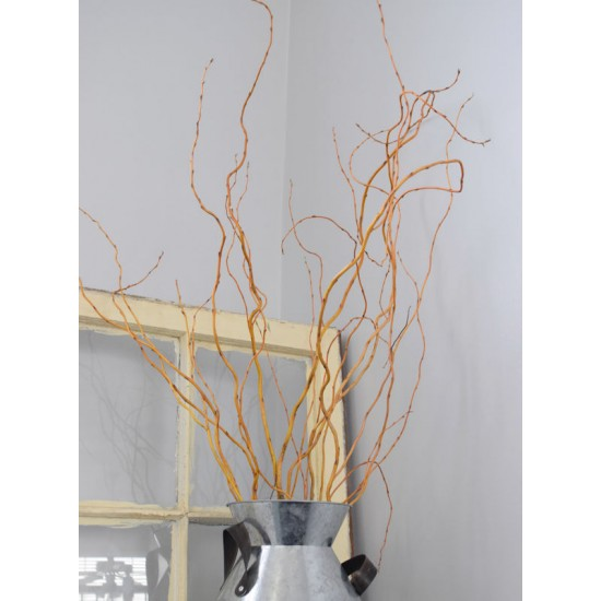 Curly Willow Branches for Arrangements (Long Stem)