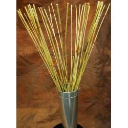 Decorative Elephant Reeds (Equisetum Like Reed)