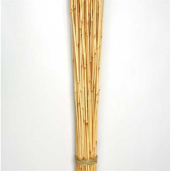 Dried Honey Bamboo Stack - 4ft Natural