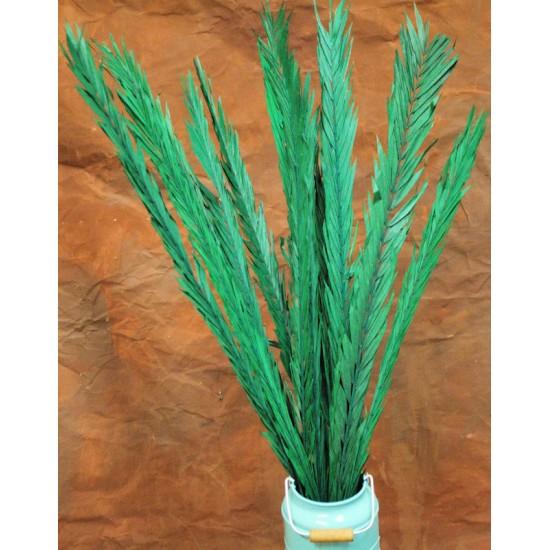 Dried Rahul Stick Green