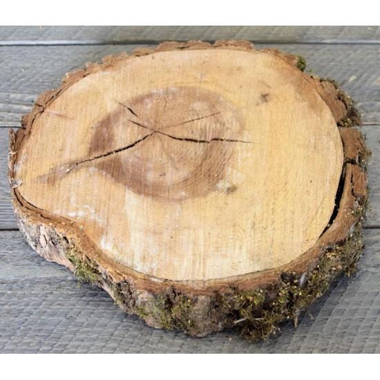 Elm Wood Slices - Large