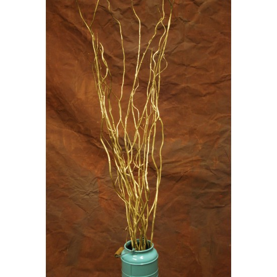 Gold Curly Willow Branches