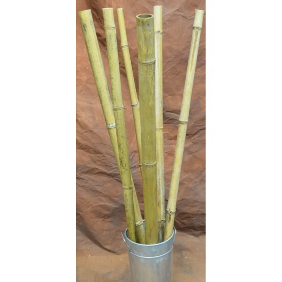 Long Dried Natural Bamboo Stalks - Shoots