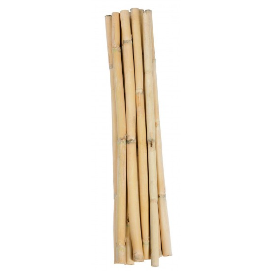 Short Dried Bamboo Stalks - Shoots
