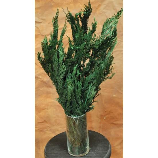 Preserved Cedar Tips - Cedar Boughs