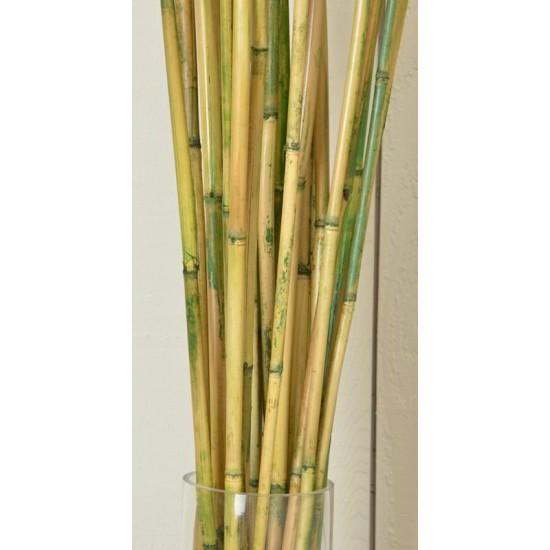 River Cane - RiverCane Bamboo
