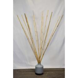 Wild Cane - Natural Bamboo
