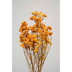 Dried African Daisy Flowers Bunch (Limited Stock)