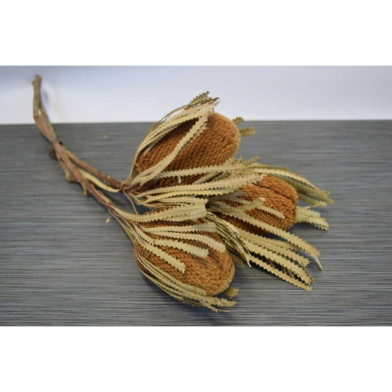 Dried Banksia Hookeriana - with natural leaves