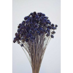 Dried Brazilian Hill Flowers - Navy Blue (Limited Stock)