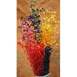 Dried Centaurea Flower - Open Colors