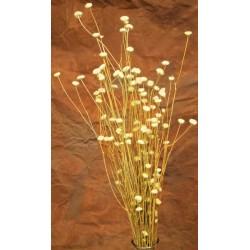 Dried Centaurea Flower - Open