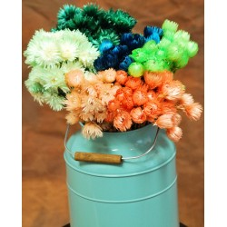 Dyed Everlasting Flowers - Dried Helichrysum