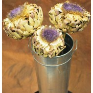 Dried Artichoke Blooms on Stem