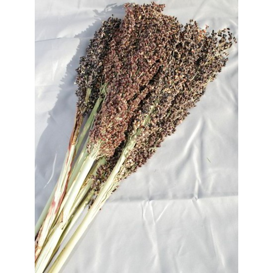 Dried Broom Corn - Decorative Black