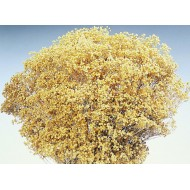 Dried Natural Bloom Broom Flowers - Brooms Bloom