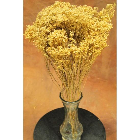 Dried Natural Bloom Broom Flowers - Brooms Bloom