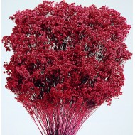Dried Broom Bloom Flowers - Colors
