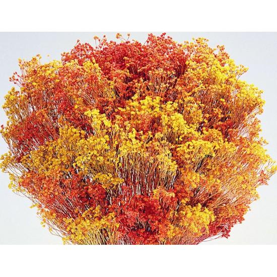 Dried Broom Bloom Flowers - Colors