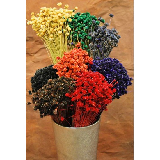 Dried Brazilian Hill Flowers - Natural