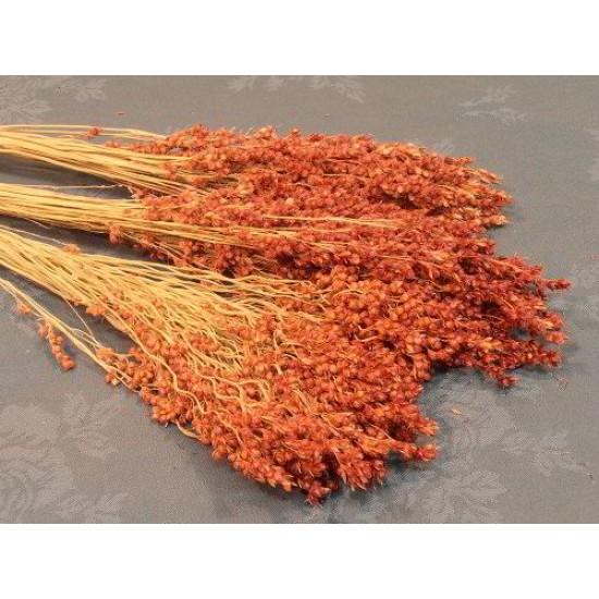 Dried Broom Corn - Decorative Red
