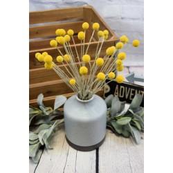 Dried Craspedia (Billy Balls) Flowers
