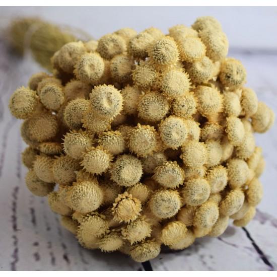 Dried Diamond Button Flowers