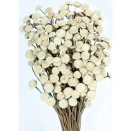 Dried Floral Button Flowers - Natural Color