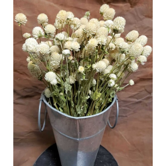 Dried Globe Amaranth - White