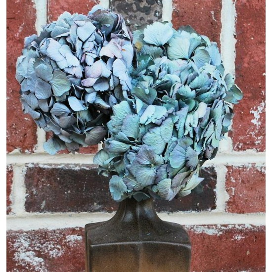 Dried Hydrangea Flower Bunch - Blue Color