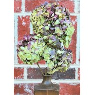 Dried Hydrangea Flower Bunch - Burgundy Color