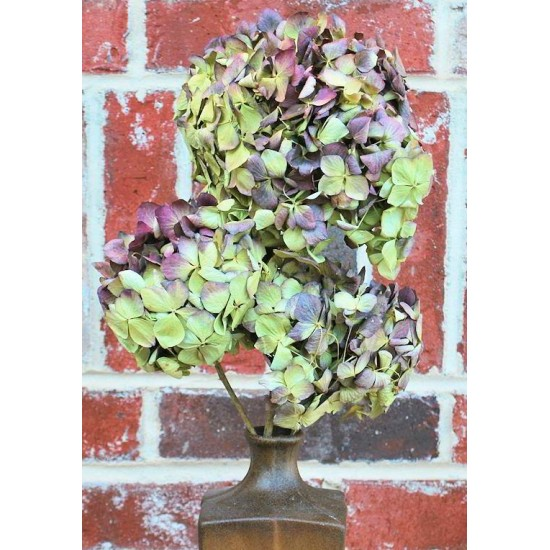 Dried Hydrangea Flower Bunch - Burgundy Color