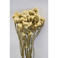 Dried Statice Sinuata Flower Bunch - White