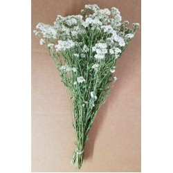 Dried Pearly Everlasting Flower Bunch