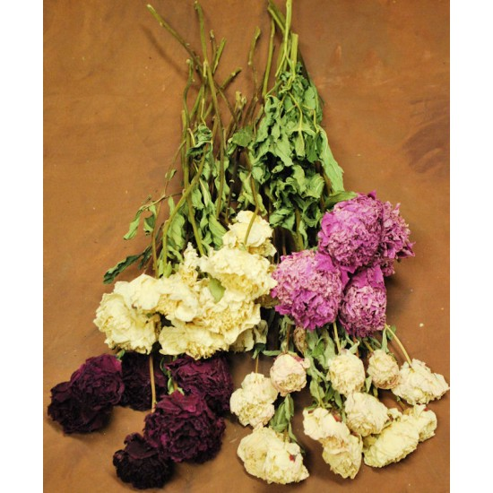 Dried Peonies Flowers Bunch
