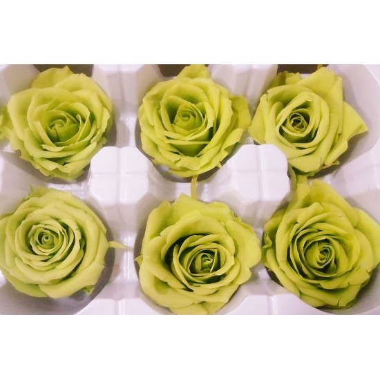 Preserved Roses - 8 per Order - Colors: Green, Blue, Black