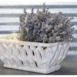Dried English Lavender Bunch - Large Bundle of Royal Velvet