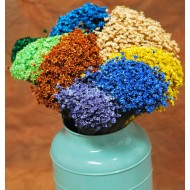 Dried Star flower - Dyed Starflower
