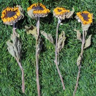 Dried Sunflowers Bunch - Large