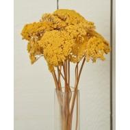 Dried Yarrow Flower Bunches