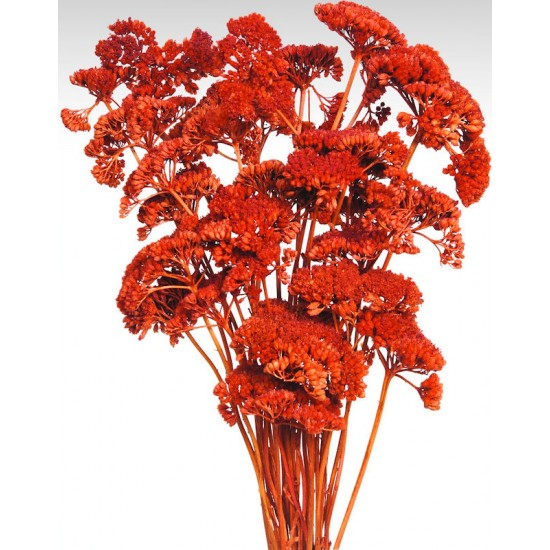 Dyed Yarrow Flower Bunches