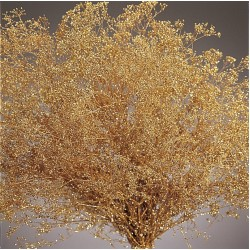 Gold Sparkle Stardust Gypsophila - Baby's Breath - Case Only